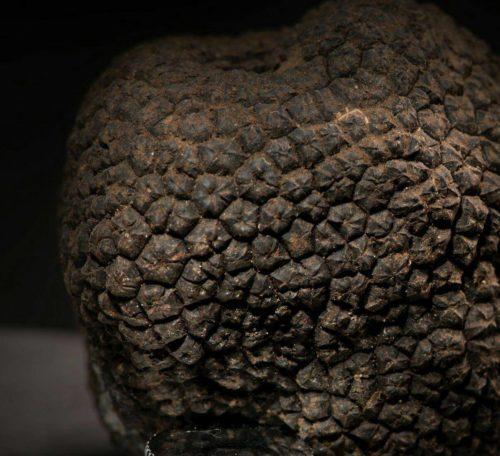 truffle photo slider